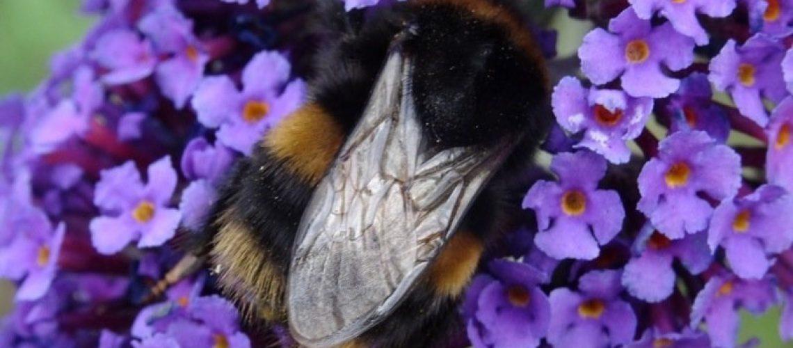 Bee 05